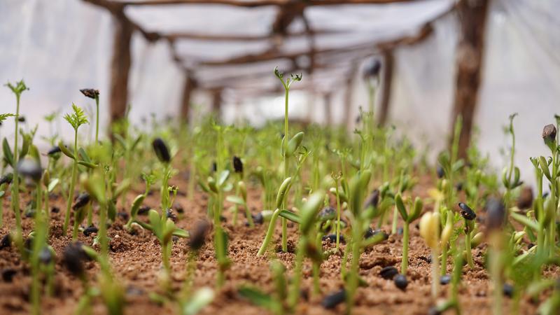 Seedlings in a tree farm