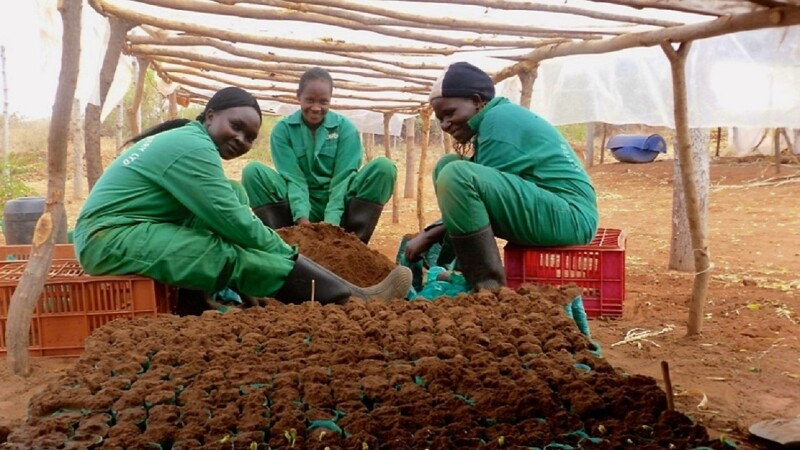 Tree farmers working with soil and saplings